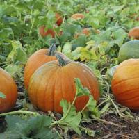 Best Pumpkin Apple Picking Long Island Ny by 5 Places To Drink Hard Cider On Long Island Long Island Pulse