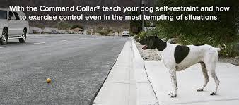 Perfect Dog Training Videos FAQs