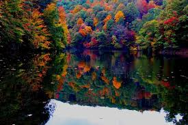 Laurel Bed Lake by North Fork Of Pound Reservoir Virginia Is For Lovers