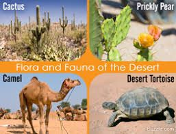 Earth Floor Biomes Desert by Desert Biome A Definitive Guide To Its Animals And Plants
