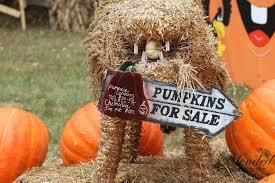 Pumpkin Picking Nj 2015 by Ward U0027s Pumpkin Patch Home Facebook