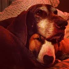 Parkers Dogs Pearl Emma The Inspirations For In Spenser And Sunny Randall Books