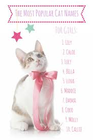 popular cat names best 25 most popular cat names ideas on hello kitten