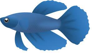 582x336 Fish Clipart Small