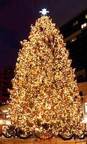 Top 10 Largest Christmas Trees In The US