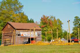 Piedmont Pumpkin Patch by Greensboro Daily Photo October 2011