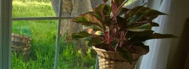 plantes vertes d interieur plantes vertes plantes vertes fleuries plantes dépolluantes d