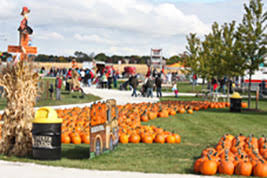 Southern Illinois Pumpkin Patches by Illinois Greenhouse Farm Stand And Pumpkin Patch Didier Farms