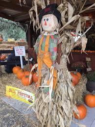 Pumpkin Patch In Orlando Fl by Fall Festival Pumpkin Patch Apopka Fl Club Lake Plantation
