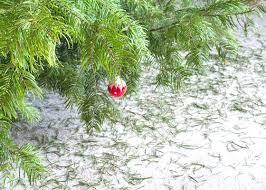 Christmas Tree Disposal Bags Home Depot The Depots Garden Club Kitchen Island Lighting Ideas