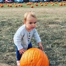 Sacramento Pumpkin Patch With Petting Zoo by Nicasio Valley Farms Pumpkin Patch 11 Reviews Local Flavor