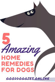 Dogs That Dont Shed Bad by Best 25 Dog Shedding Remedies Ideas Only On Pinterest Dog