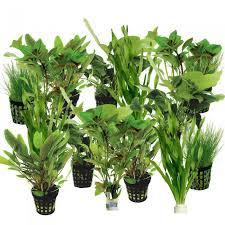 lot de plantes facile pour aquarium 150 250 litres 20 plantes