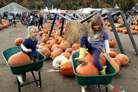 Pumpkin Patch Edmond Oklahoma by Best Pumpkin Patches And Farms Near Seattle