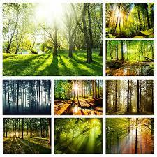 vlies fototapete wald grün sonne landschaft tapete
