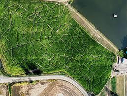 Sauvies Island Pumpkin Patch Corn Maze by 8 Great Pumpkin Patches In Oregon