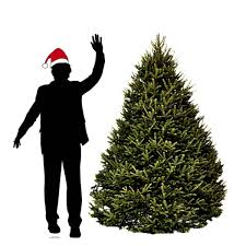 Balsam Christmas Trees Real by 6 Ft Balsam Fir Christmas Tree Hilltop Christmas Tree Delivery
