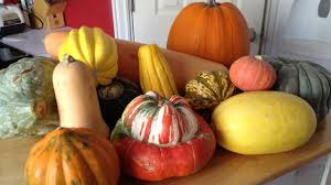 Types Of Pumpkins And Squash by Winter Squash Youtube