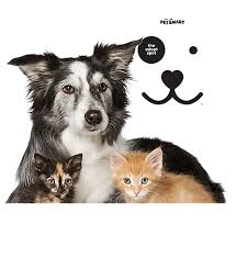 adopt a cat cats and dogs for adoption petsmart saves lives