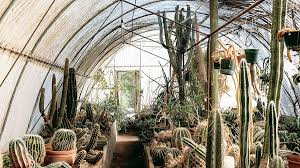 7 Striking Palm Springs Gardens to Visit Sunset Magazine