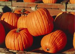 Pumpkin Farms In Southern Maryland by The Top 5 Pumpkin Patches In Tallahassee You Need To Visit This