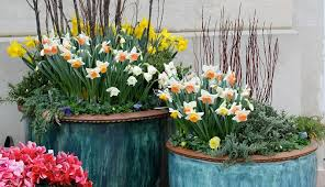 forcing flower bulbs in the fall for late winter blooms hobby farms