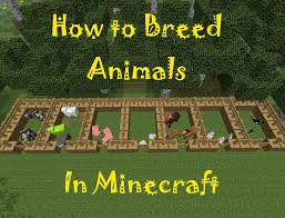 Minecraft Automatic Pumpkin Farm Xbox by How To Breed Animals In Minecraft Levelskip