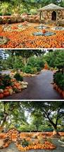 Pumpkin Patch Dfw Metroplex by 57 Best Holiday At The Arboretum Images On Pinterest Dallas 12