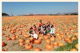 Live Oak Canyon Pumpkin Patch 2015 by 100 Oak Glen Pumpkin Patch 6 Family Friendly Fall
