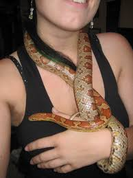 Corn Snake Shedding Too Often by R Snakes What U0027s The Worst Thing And The Best Thing About Your