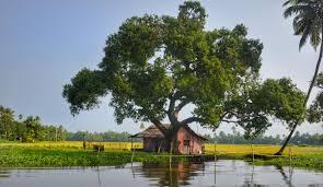 104 River Side House Tree Shade Side Free Photo On Pixabay