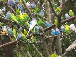 Parrot Caught Singing Bodies Hit The Floor by Eerie Bird Superstitions Nature Center Magazine