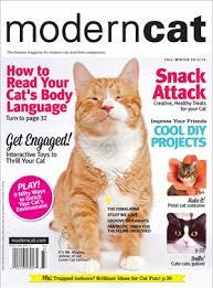 modern cat modern cat cats wiki fandom powered by wikia