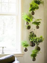 Plants For Bathrooms With No Light by 15 Gorgeous Ways To Decorate With Plants String Garden Low