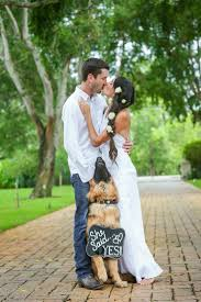30 Best Engagement Images On Pinterest Engagement by Best 25 Dog Proposal Ideas On Pinterest Dog Engagement Pictures