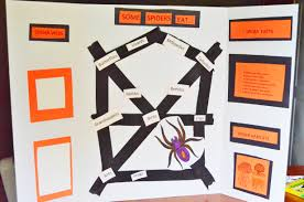 Spider Web Collecting Science Fair Project EEKologist