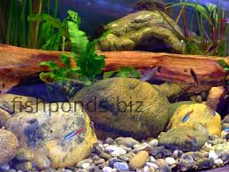 large aquarium rocks for sale using rocks in fish tanks with a friendly forum and faq