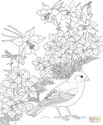 Click The Lark Bunting And Columbine Colorado State Bird Flower Coloring Pages