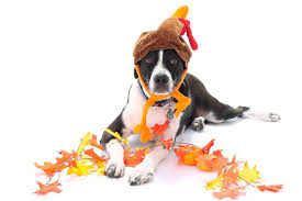 Turkey And Pumpkin For Dog Diarrhea by Are These Thanksgiving Foods Okay For Your Dog To Eat