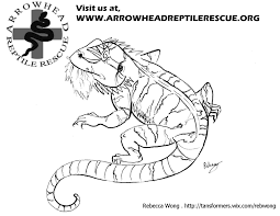 Bearded Dragon Clipart Realistic Pencil And In Color