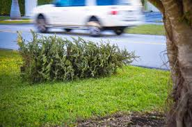 Christmas Tree Cataract Surgery by City County Offers Christmas Tree Collection Services