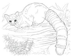 Preschool Farm Coloring Pages Free Zoo Animals Animal Book For Preschoolers