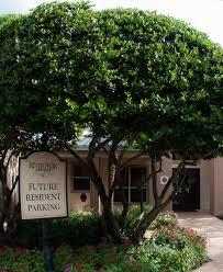 100 Riverpark Apartment Orlando S For Rent River Park S Pet Friendly