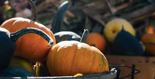 Pumpkin Patch Roseville Ca by Your Guide To Apple Hill Farms During The Fall Sacramento Real Estate