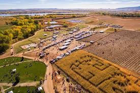 Denver Area Pumpkin Patches by Pumpkin Patches In And Around Denver 2017 The Denver Ear