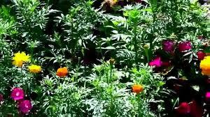 Flowers For Flower Beds by Low Cost U0026 Low Maintenance Flower Garden Youtube