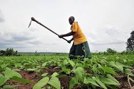 biblioth鑷ue bureau sur mesure agricultural development eco emploi