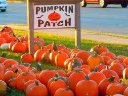 Dollingers Pumpkin Farm Minooka Il by Pumpkin Patches Corn Mazes Fall Festivals In The Lake Forest