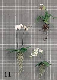 zimmerpflanzen überraschend inszeniert orchideen