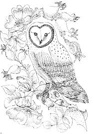 Bird Coloring Pages Barn Owl And Wild Roses
